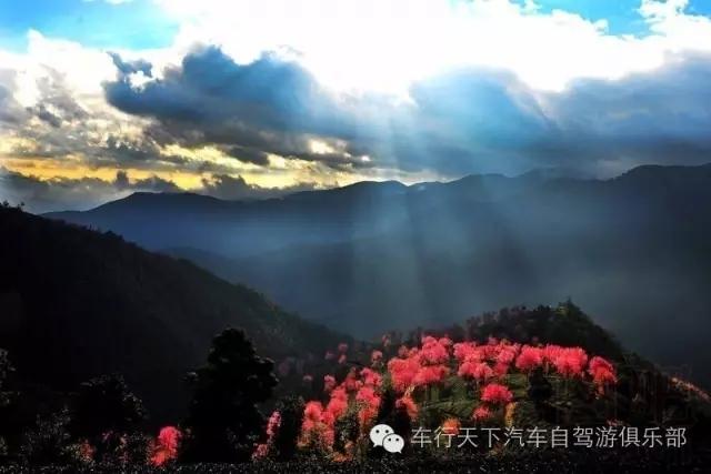 绝美无量山樱花谷,色迷腾冲自驾7日游_泸州车行天下游