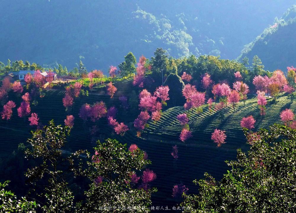 无量山镇  -  樱花谷  -南涧  -  昆明    此活动行程轻松,风景美丽