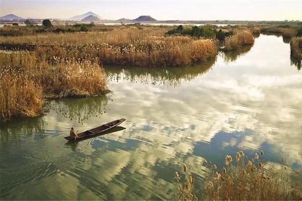 【芦苇花开】11.03周六,泛舟最美湿地下渚湖,看芦苇飘扬,静享新市古镇慢时光