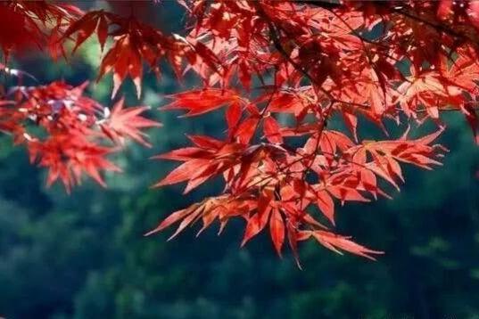 【精彩户外】12.16号(周日)探密唐诗之路,徒步漫山红枫~栖霞坑古道