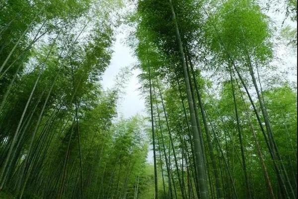 徒步初级入门线路丨每周六周日徒步穿越星溪线 三水豆腐花+腊味竹筒饭