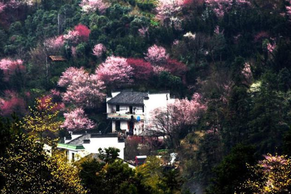 【行者无疆】徒步新安江畔,摄徽州被隐秘的梅花仙境--卖花渔村