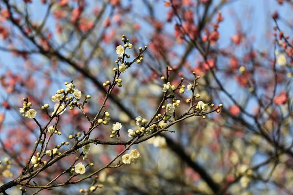 3.03/3.04 | 卖花渔村-徒步新安江畔,徽州隐秘的梅花仙境