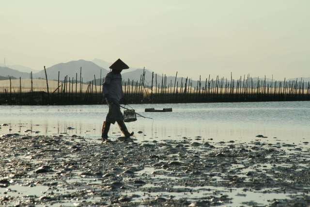 """行摄盐洲滩涂鹭鸟 穿越黑排角 双月湾观景捕鱼  惠州有一个""""藏在深闺"""