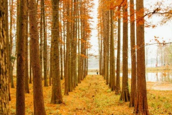 【秋色·大禹谷】11.4 大禹谷-娘娘山穿越,长乐林场红杉枫香,甘岭湖野餐之旅