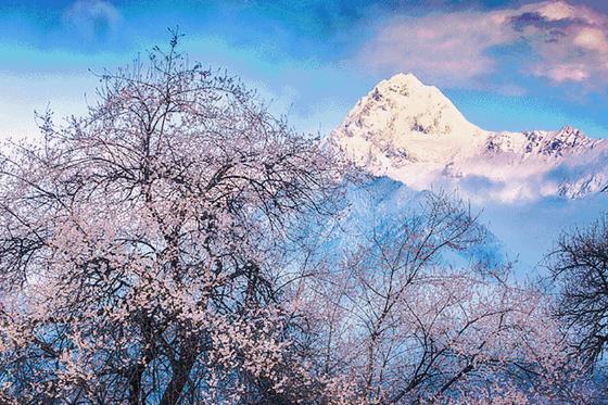 藏地桃花 | 一路向西,冰川世界里的桃花源秘境,精品摄影小团
