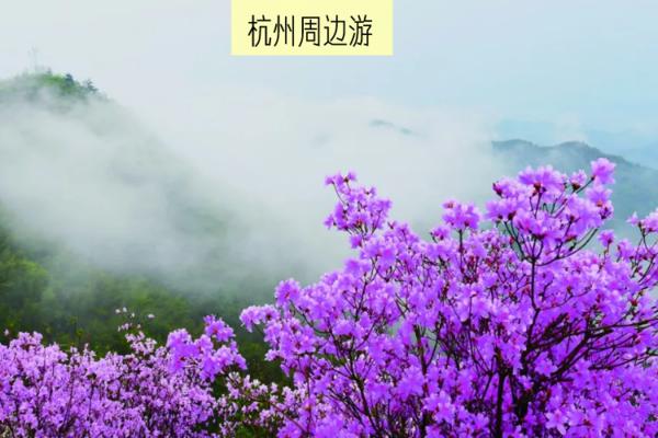 """惊艳!大杭州有个""""网红""""山,紫色映山红美得不像话!错过再等一年!"""