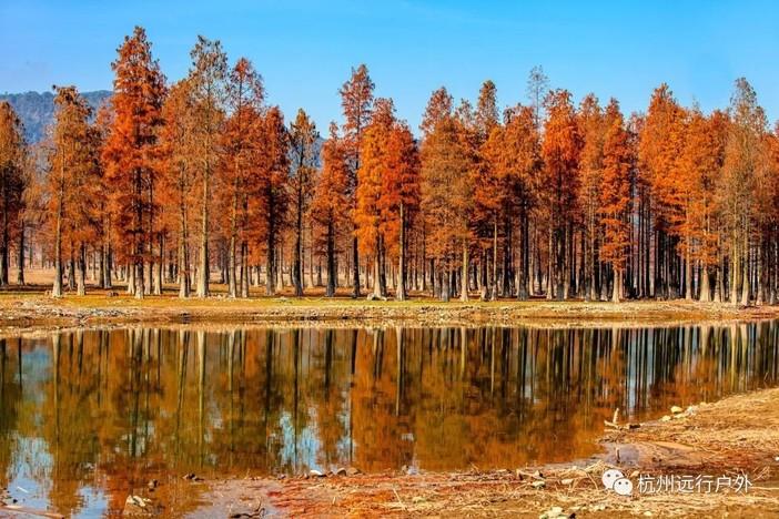 关于林��h���9�-z)�bi_「在红杉林遇见你」12.02 行摄四明湖,趁红杉正当时,徒步沧桑燕窝古道