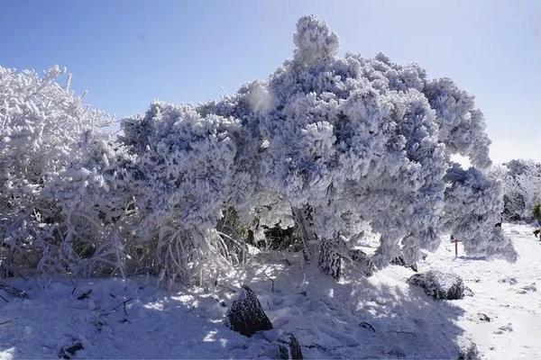 「非周末活动」12.09-10  西天目-龙王山徒步,浙江周边颜值最高的登山徒步路线,观雾凇赏雪景