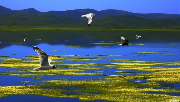 扎尕那村,九曲黄河第一湾,若尔盖花湖,拉卜楞寺,尕海湖环线精品7日游