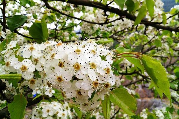 杭州最美4月天,还有这种花不能错过……