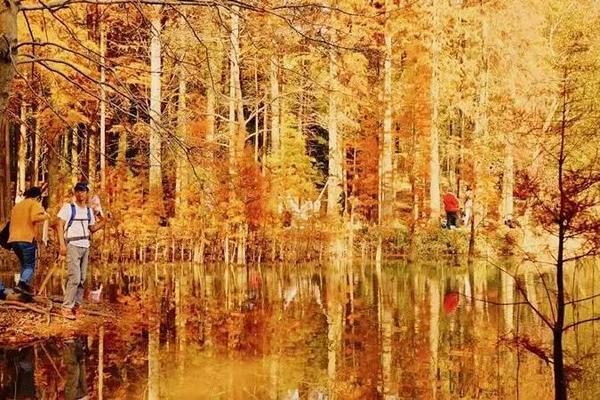 踩线回来,强推!杭州这条秋天的超人气古道,已经美得像油画~~~