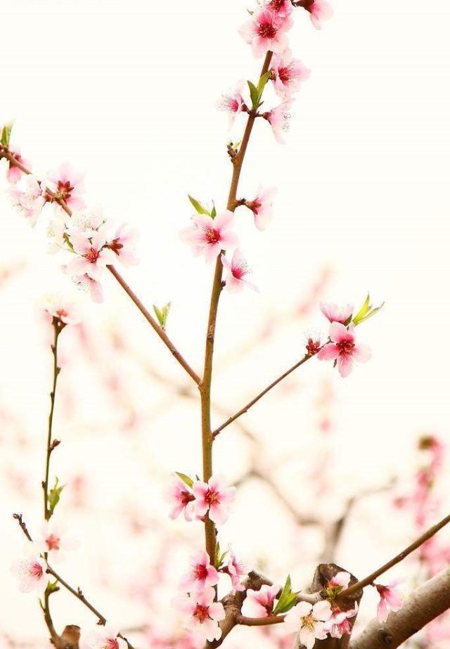 鸭头春水浓如染,水面桃花弄春脸