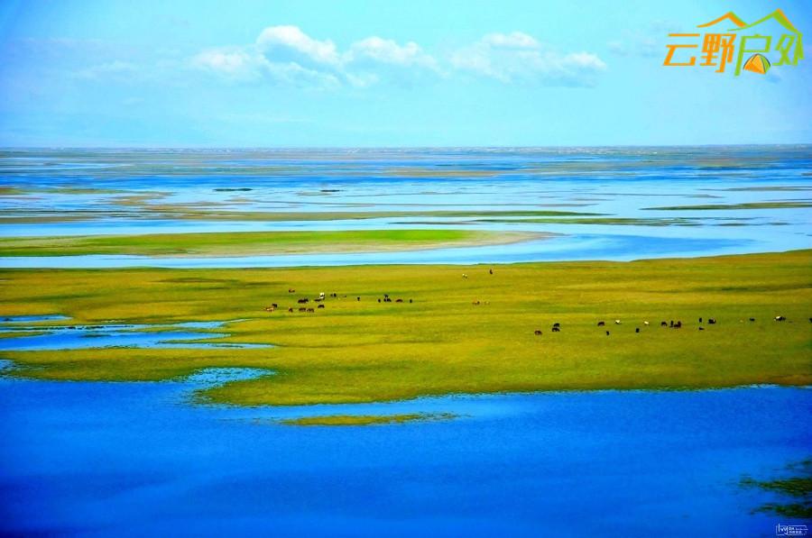巴音布鲁克的天鹅湖 (1).jpg