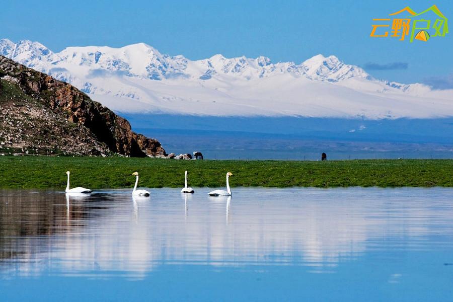 巴音布鲁克的天鹅湖 (2).jpg