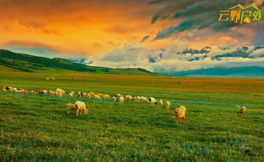 764-草原晨景。新疆赛里木湖畔清晨.jpg