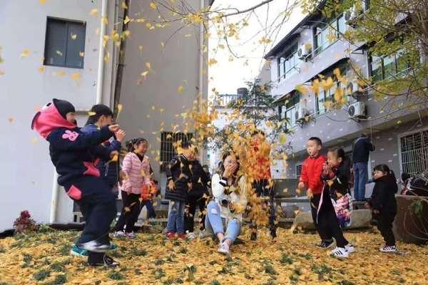 1116华东最美千年古村落,看银杏叶铺满指南村