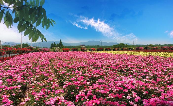 """沙岛位于富阳市城区东约一公里的富春江中,是国家级风景名胜区""""两江一"""