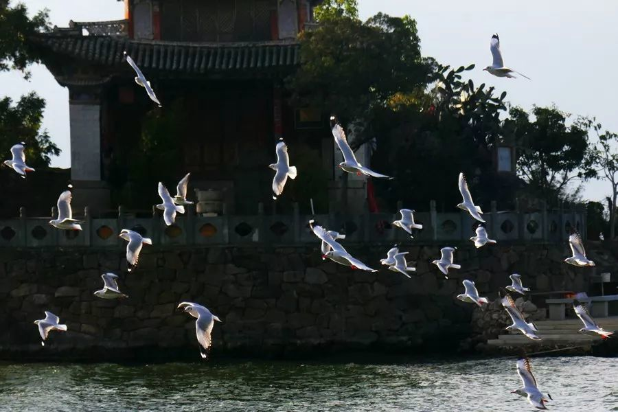 昆明#大理#泸沽湖#香格里拉