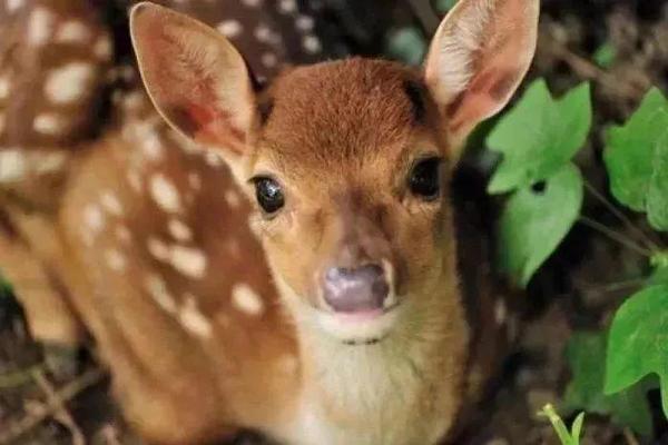网红小鹿、宫崎骏动漫感......余杭这个美到冒泡的公园,还藏着5000年的历史文化遗产