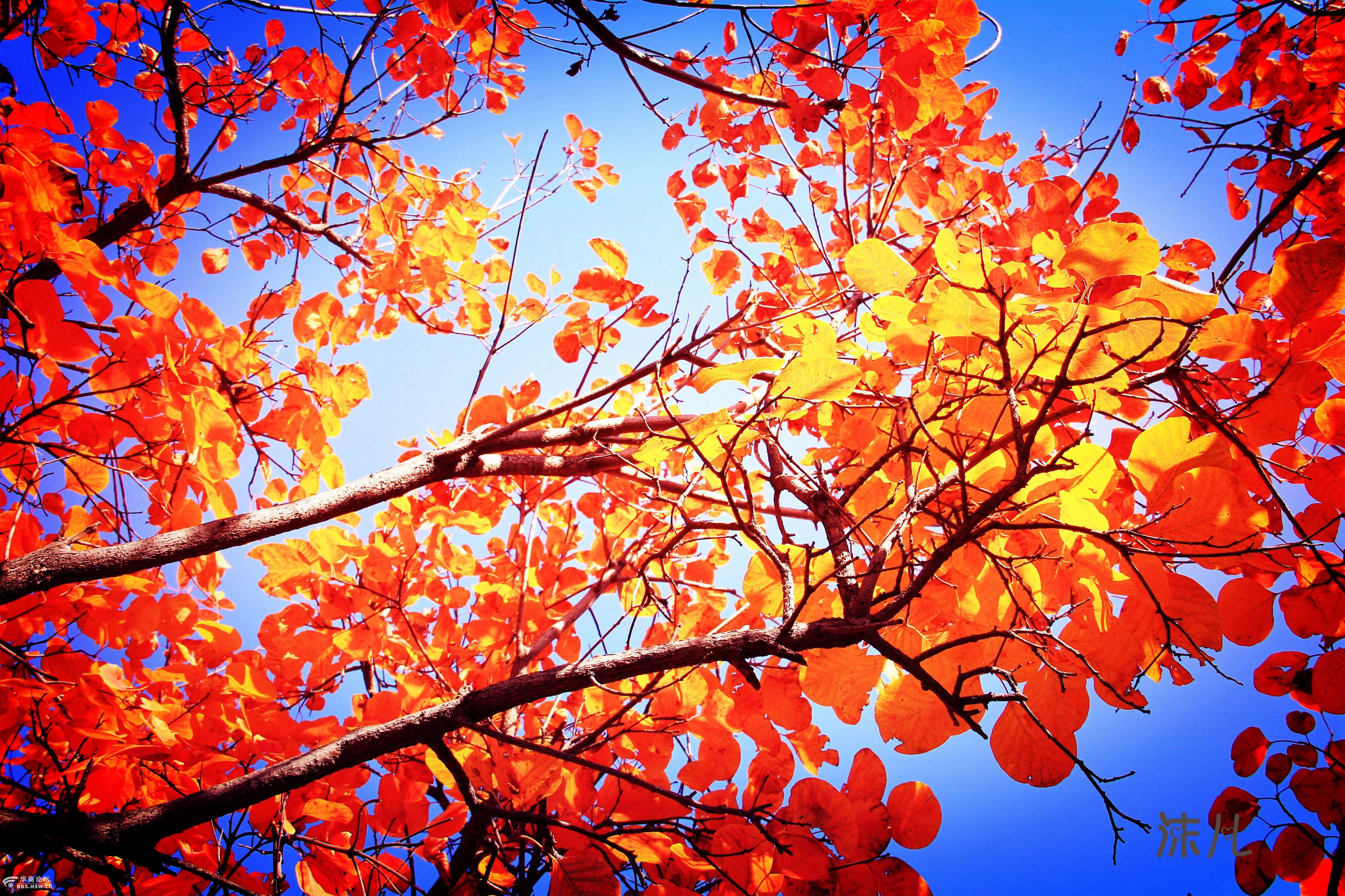 【奇峰户外】11月13日周六大小山岔芒草荡,赏红叶摘野果一日休闲游