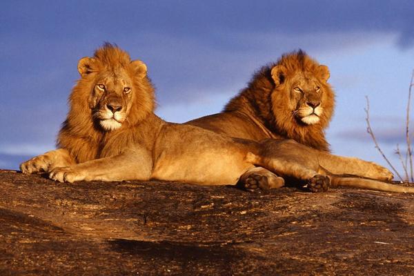 【大美非洲】2017魅力肯尼亚,野生动物大迁徙,乞力马扎罗雪山、树顶女王酒店、水鸟天堂漫游8天7晚